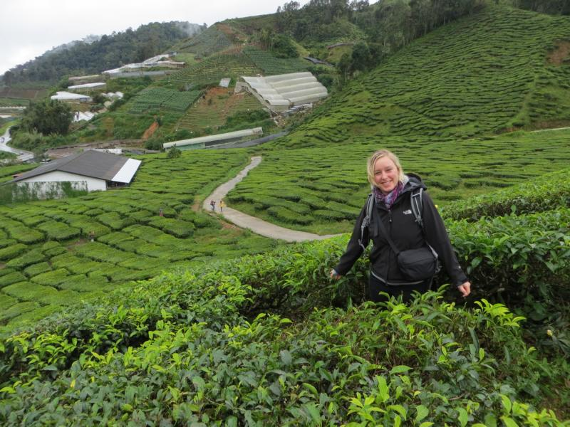 in den Cameron Highlands