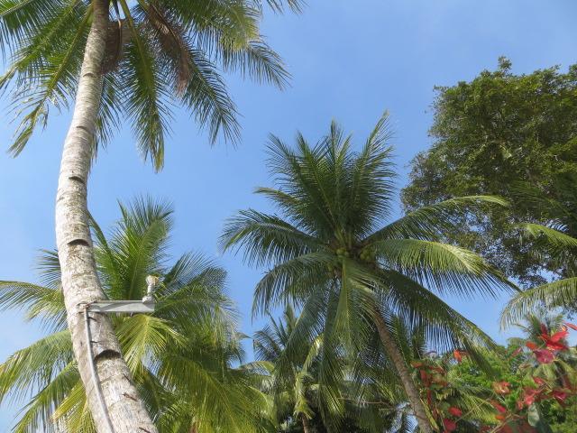in Palawan