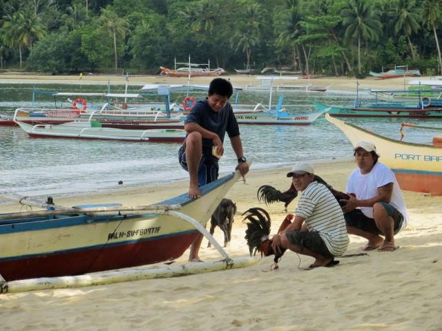 Männer mit ihren Hähnen auf den Philippinen