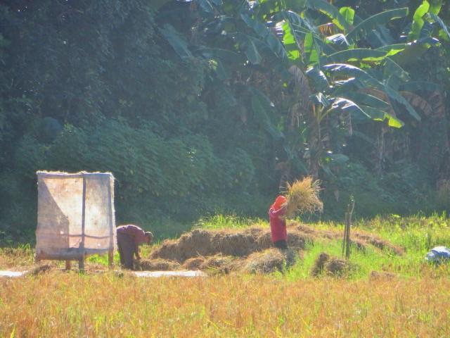 Felder bearbeiten in Borneo