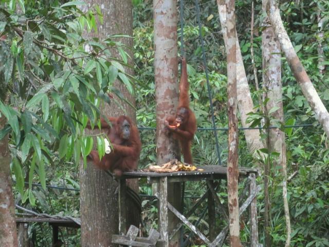 Futterstationen in der Nähe von Kuching