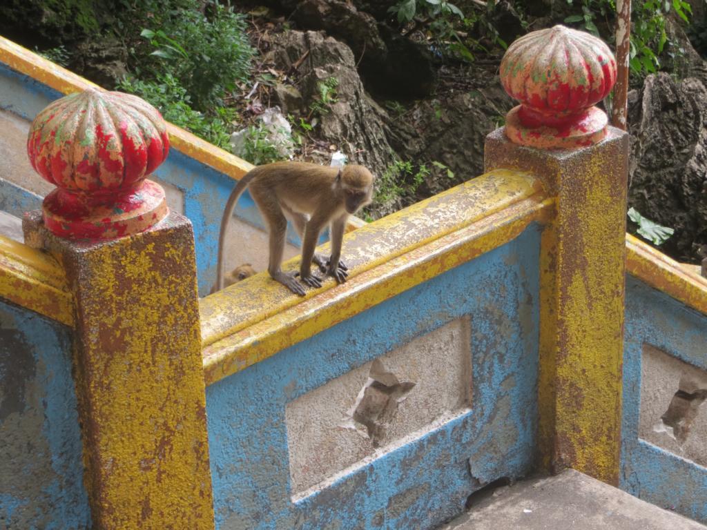 es gibt viele Affen bei den Batu Caves