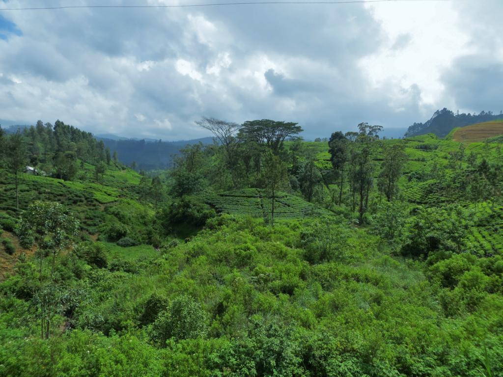 Wunderschöne Aussichten während der Bahnfahrt durch das Hochland Sri Lankas
