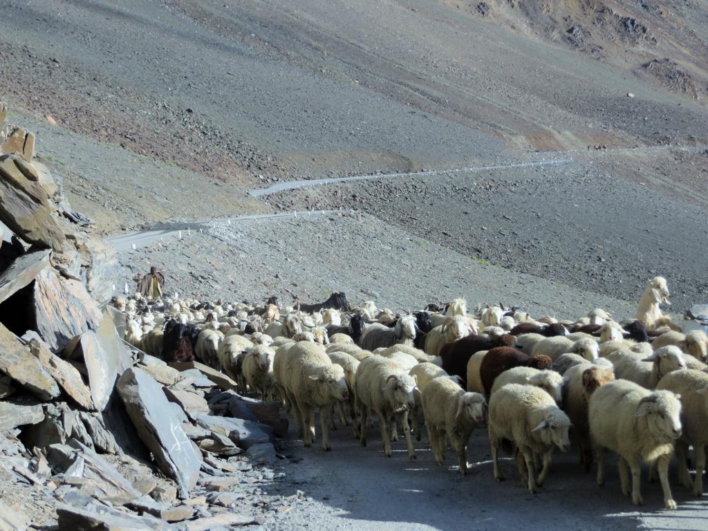 Gegenverkehr in den indischen Bergen, auf dem Weg nach Leh