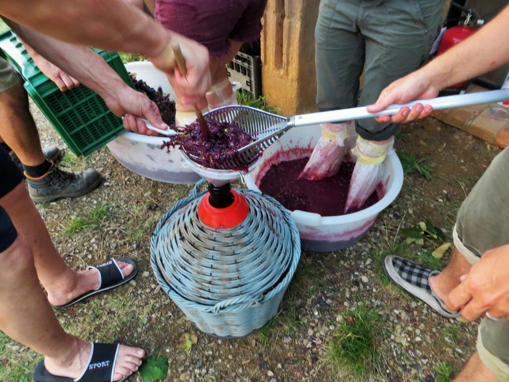 Traubenstampfen! So kann man auch Wein herstellen!