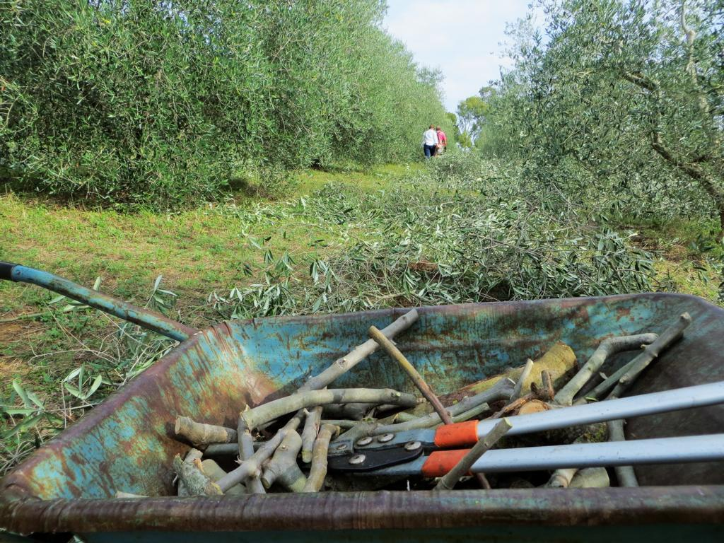 Wwoofing in Italien: Die Olivenernte ist nur eine von vielen Möglichkeiten.