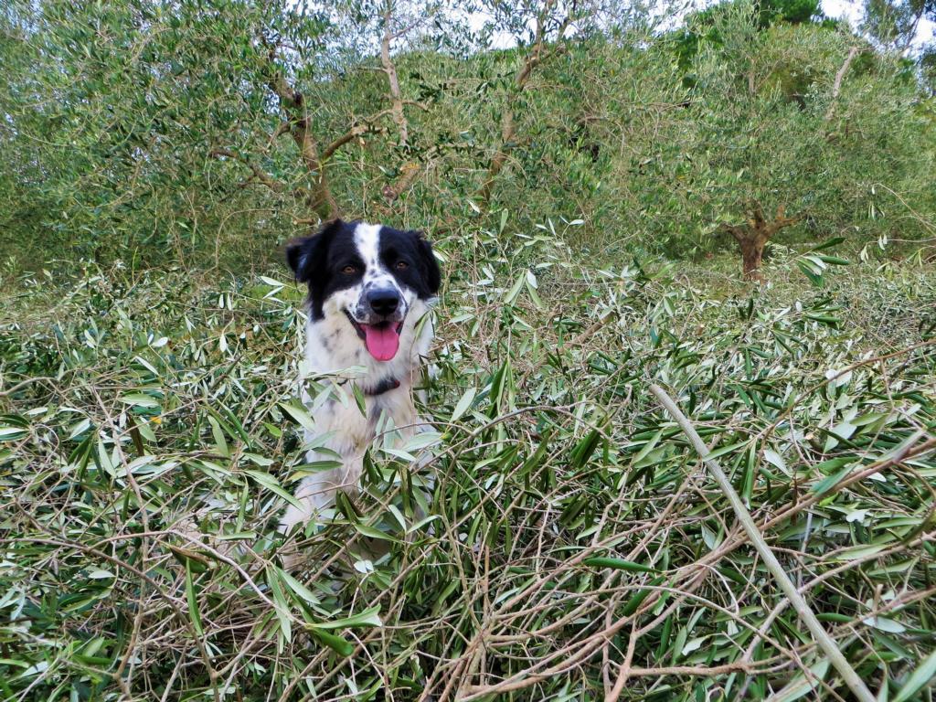 Auch immer mit dabei: Oliva, der Hofhund.