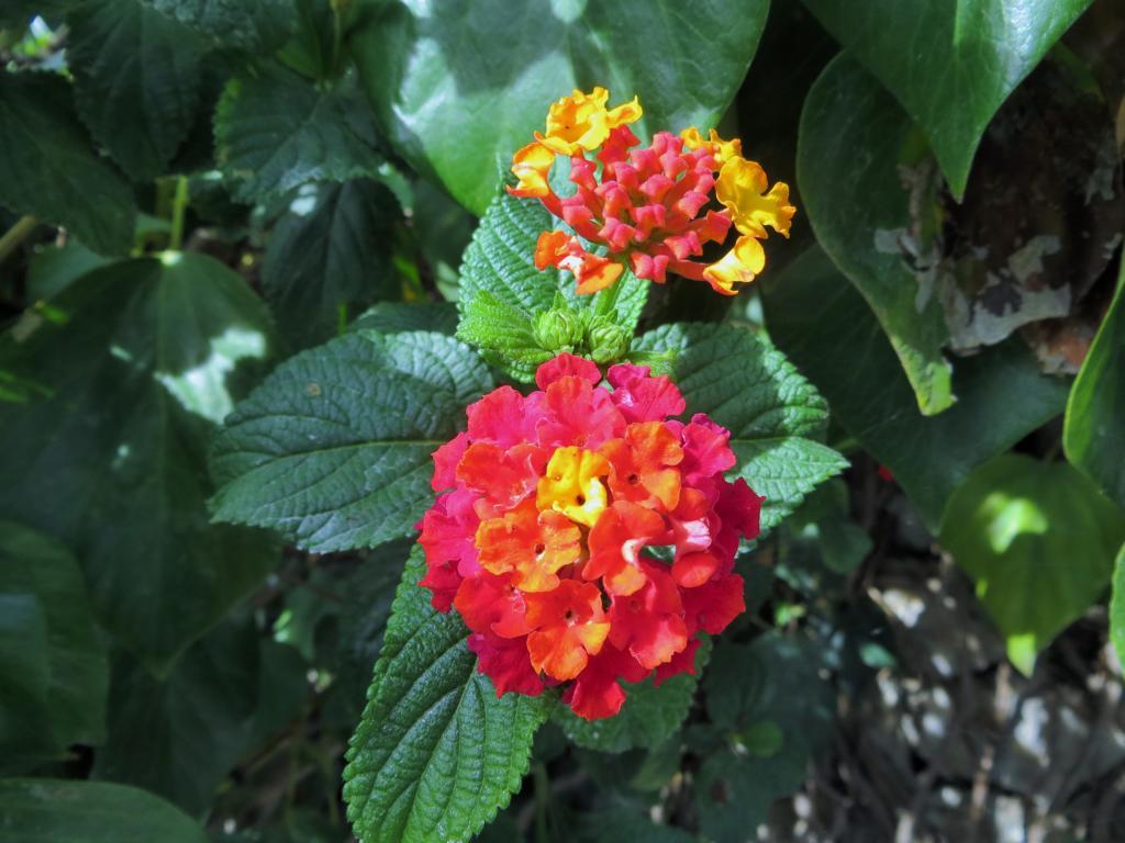 Blumenpracht auf dem Weg zum Lycabettus