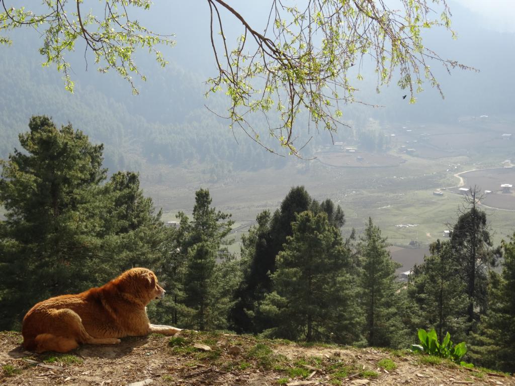 Das Phobjika Tal in Bhutan