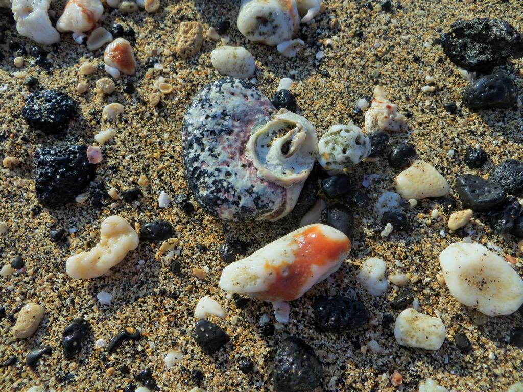 Muscheln am Strand in Kailua-Kona auf Big Island