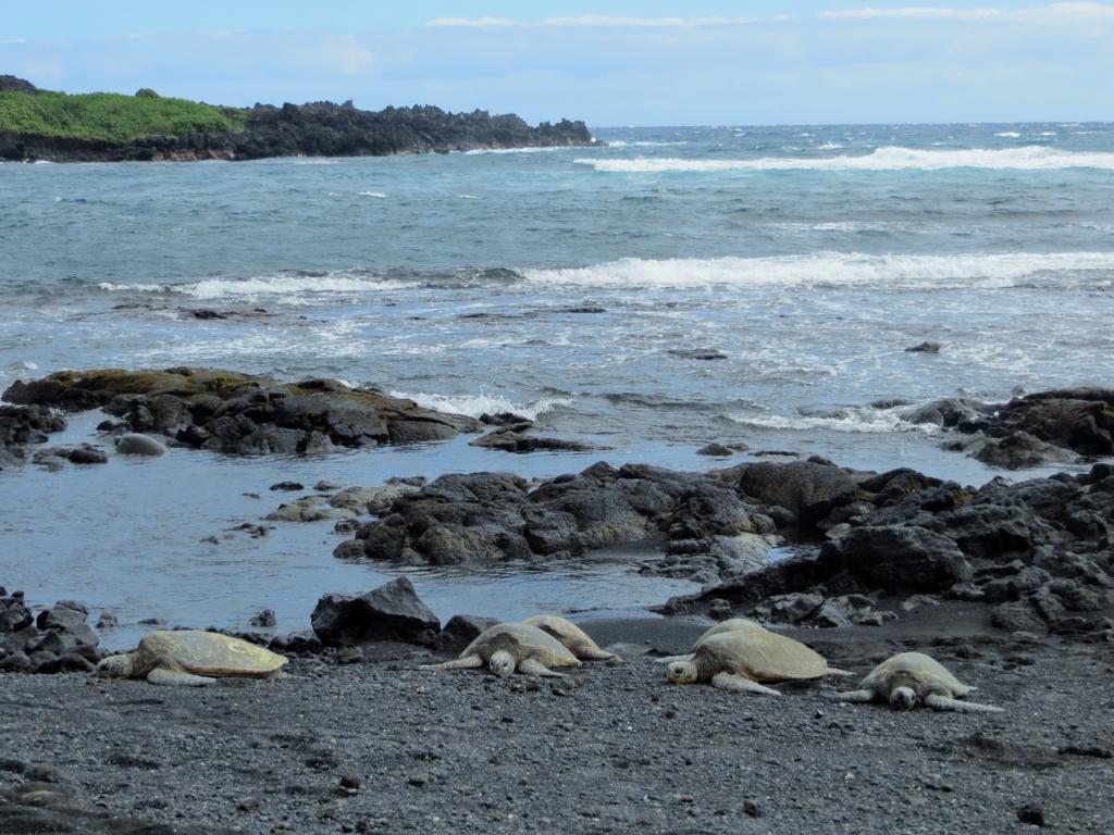 Schildkröten am Strand: Ein einmaliges Erlebnis!
