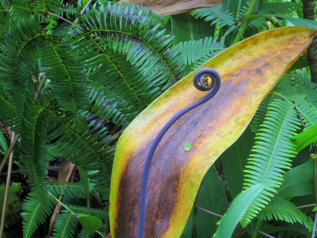 Rund um Hilo gibt es einige spezielle Pflanzen zu entdecken...