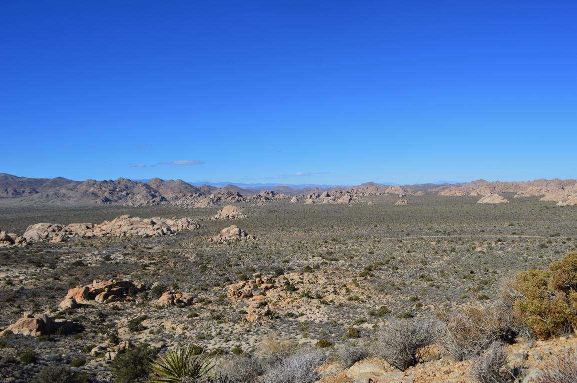 Wunderbarer Ausblick auf den Joshua Tree Nationalpark in den USA.