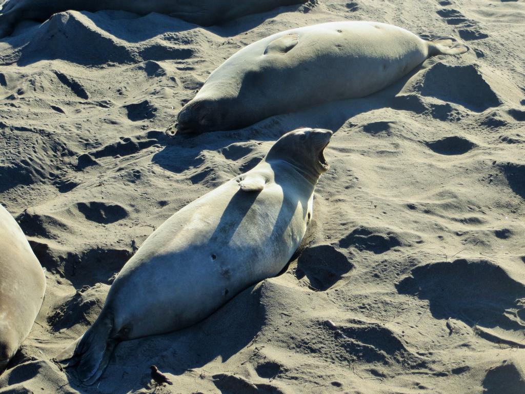 Seelöwen liegen überall fraul rum und lassen sich von der Sonne bescheinen.