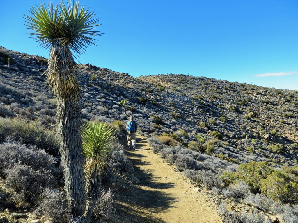 Wanderung im Joshua Tree Nationalpark.