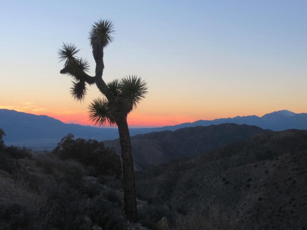 Sonnenuntergang im Joshua Tree Nationalpark.