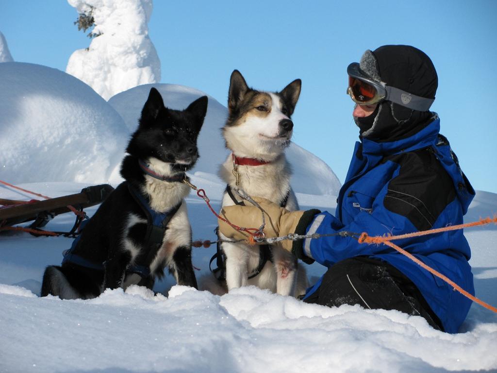Huskies in Lappland, ein besonderes Erlebnis. Foto: Melanie von Good Morning World.