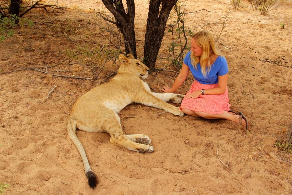 Mit einer Löwin in der Kalahari von Botswana. Bild: Carina von Last Paradise