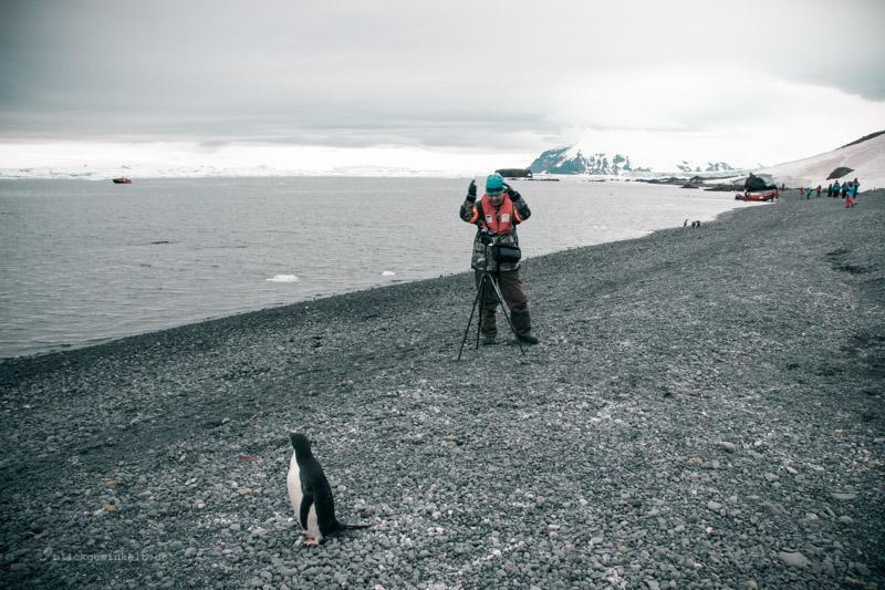 Eine Begegnung mit Pinguinen in der Antarktis. Bild: Inka von Blickgewinkelt