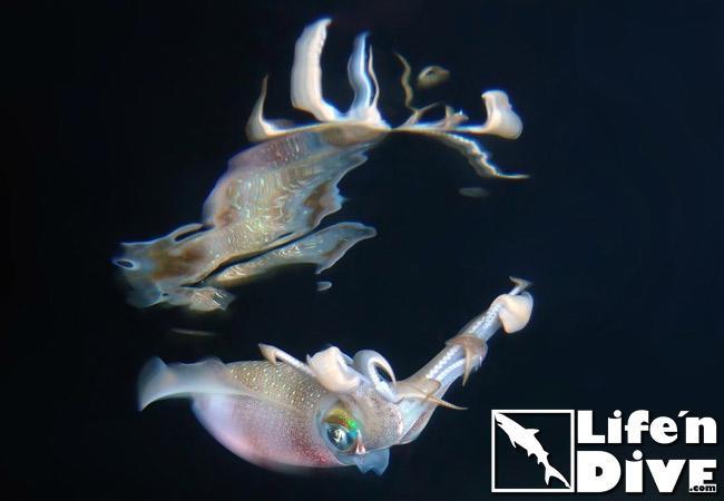 Faszinierende Unterwasserwelt auf den Malediven.