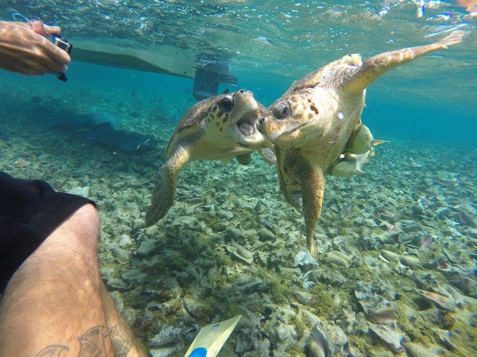 Unterwasserwelt in Caye Caulker. Photocredit an meinen Mitreisenden Finne Eero. Danke für das Bild!