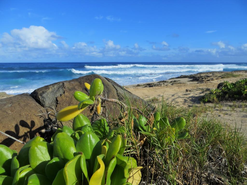 Hawaii, immer eine Reise wert!