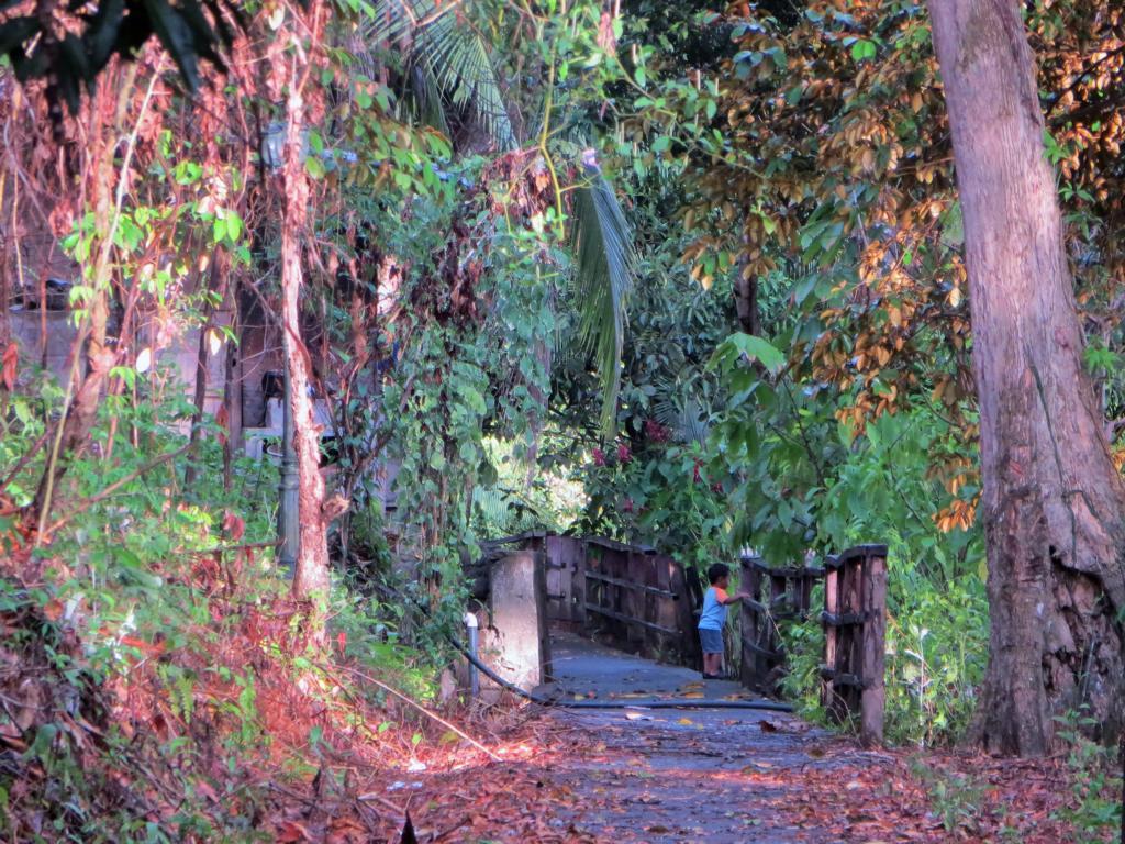 Die Hautptstrasse auf der Isla San Fernando, eine der 36 Inseln des Solentiname Archipels.