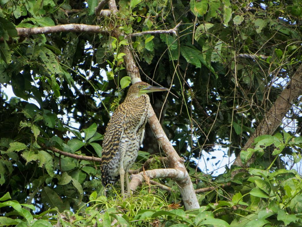 Im Los Guatuzos Wildlife Refuge gibt es unzählige Vogelarten.