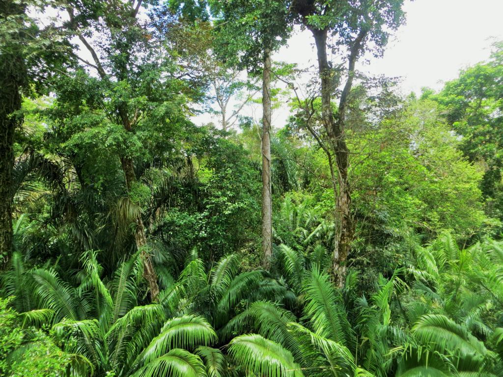 Ausflug in den Wald im Los Guatuzos Wildlife Refuge auf den Solentiname Inslen in Nicaragua.