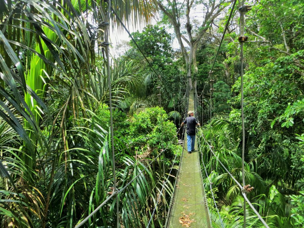 So macht das Entdecken des Waldes Spass!