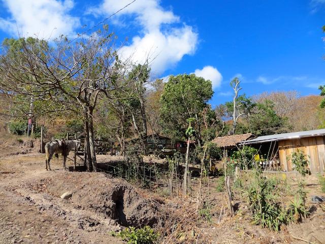 Bauernhof in der Nähe von Estelí in Nicaragua.