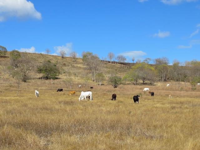 Von Matagalpa bist du innert kürzester Zeit mitten in der Natur.