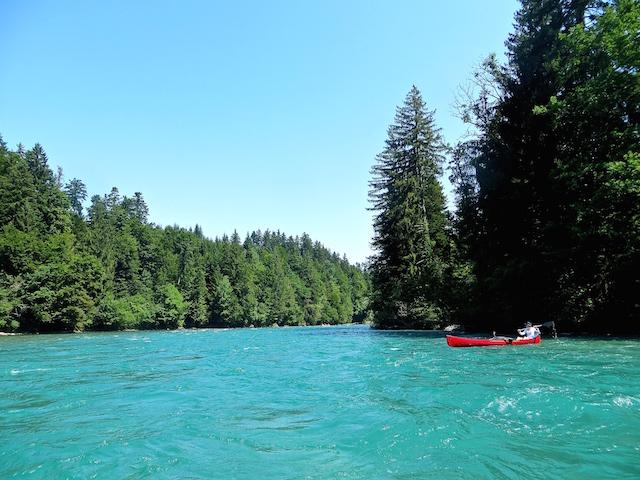 Die schöne, grüne Aare, mein Lieblingsfluss und perfekte Abkühlung im Sommer.