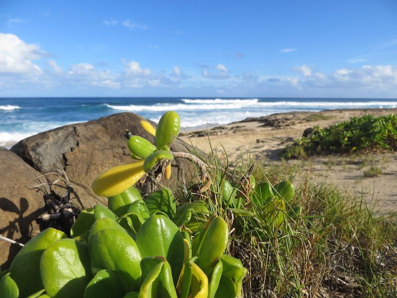 An der North Shore auf Oahu.