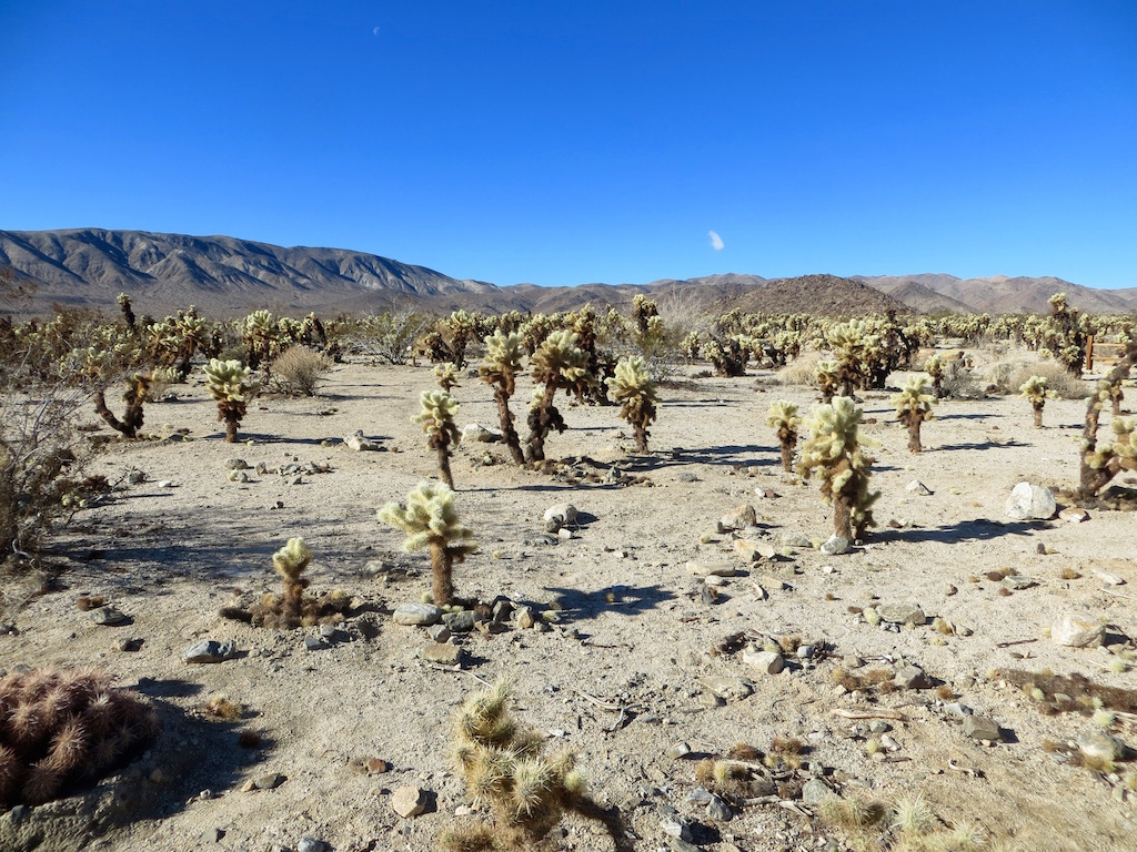Unterwegs in Amerikas Nationalparks - hier im Joshua Tree Nationalpark.