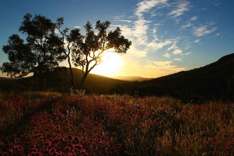 Wildblumen, Karijini NP