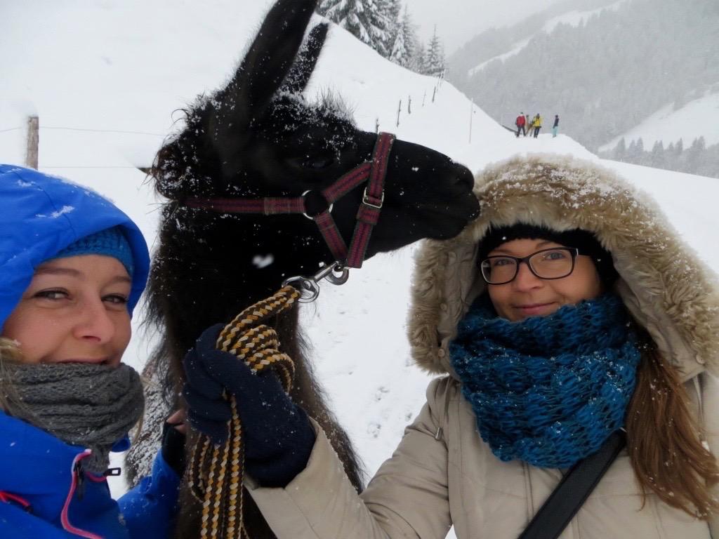 Und wie fotogen die Lamas dann noch sind!