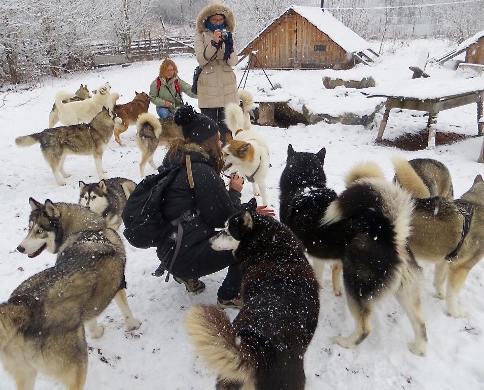 Aber Hallo! Gruppenkunuddeln mit Huskys!