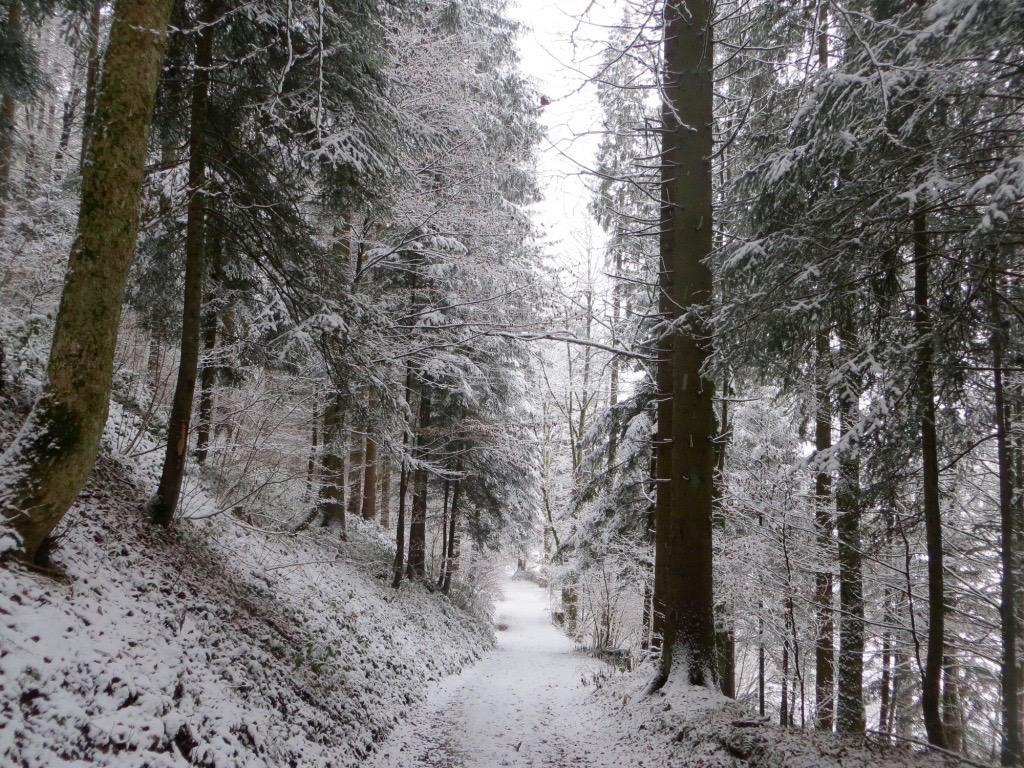 Winterspatziergang in Tirol.