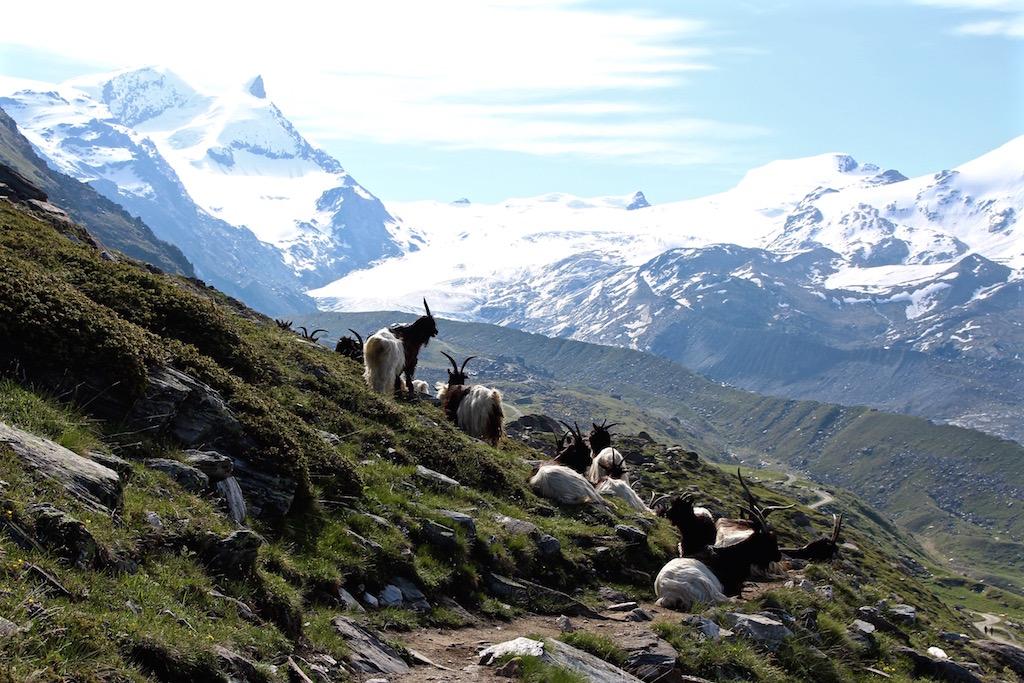 Obwohl man in Zermatt fast nur tolle Aussicht haben kann!