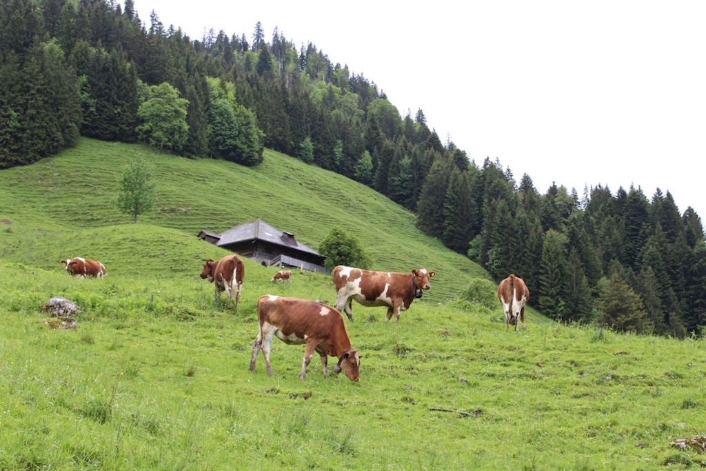 Die Bergwelt beim Schwarzsee in Fribourg Region.
