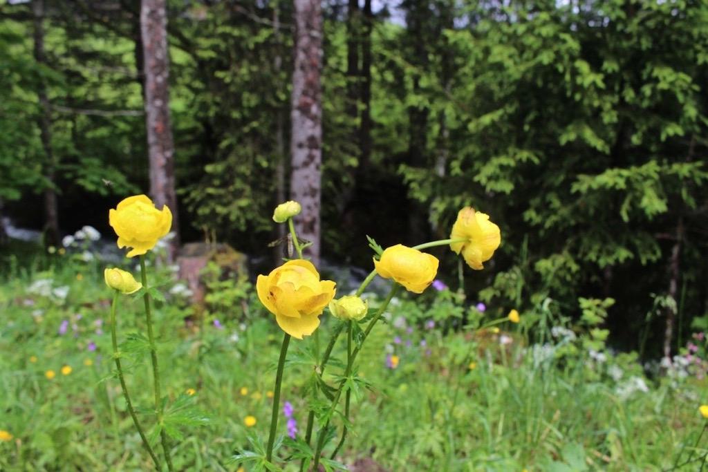 Wilde Blumenwiesen unterwegs.