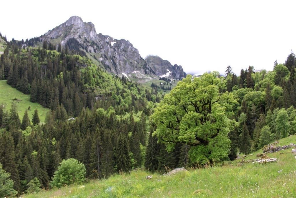 Unterwegs zum Breccaschlund in Fribourg Region.
